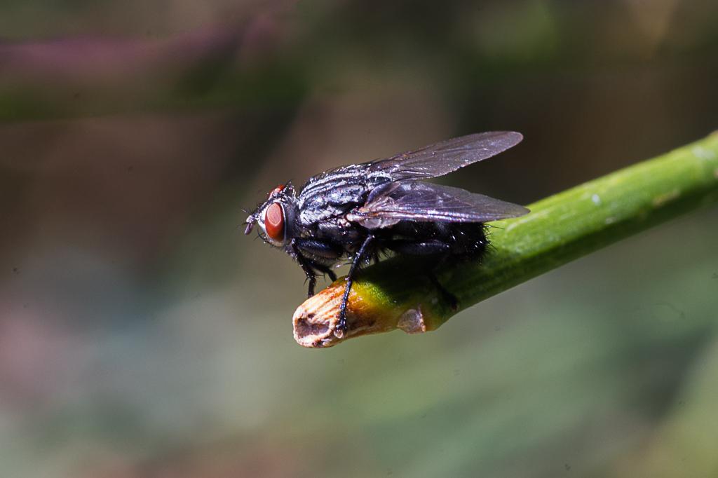 Macros/  proxi/  insectes  - Page 30 17011811384522554714781265