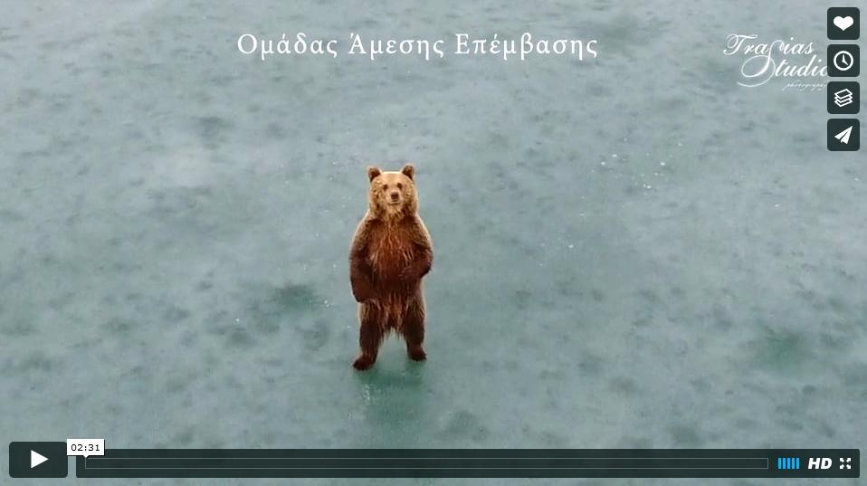 L'ours sur le lac gelé de Kastoria (Grèce) 17020705484618848214831287